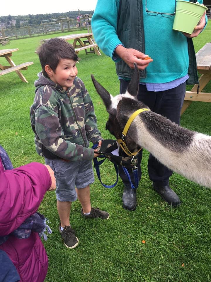 CWCF Visit the Llama Park